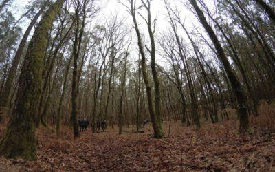 Compostela Aberta pide a declaración do Souto como Espazo Natural de Interese Local