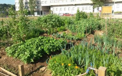 Compostela Aberta reclama a reapertura das hortas urbanas